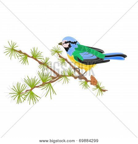 Titmouse Bird On Larch Vector