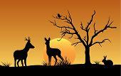 stock photo of roebuck  - Vector of deer - JPG