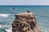 stock photo of gannet  - The Gannet Colony on rock in Muriwai Beach on The West Coast of The North Island Auckland New Zealand - JPG