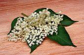 pic of elderberry  - Health elderberry flowers on a wooden table - JPG