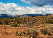 picture of prickly-pear  - Prickly Pear Cactus in The Sonora desert in central Arizona - JPG