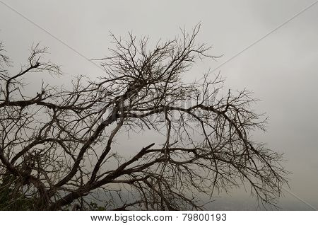 leafless braches