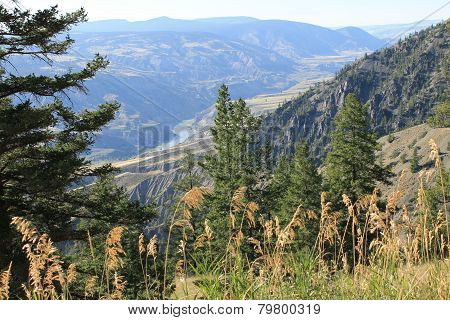 Tall grasses above the canyon