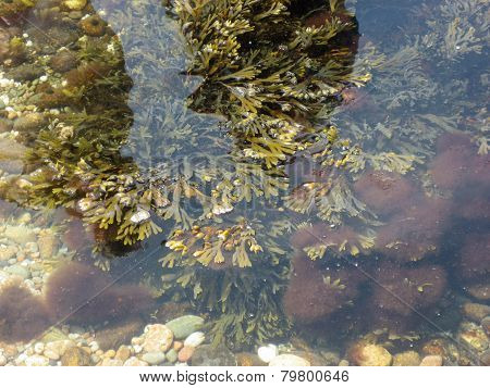 Aquatic Plants In Coastal Water