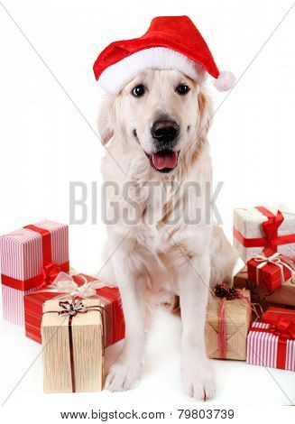 Adorable Labrador in Santa hat sitting with present boxes, isolated on white