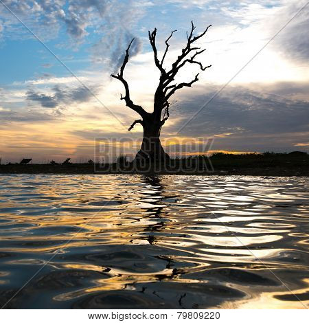 Beautiful sunset over the dead tree and its reflection on the lake surface near U-Pain bridge, Manda