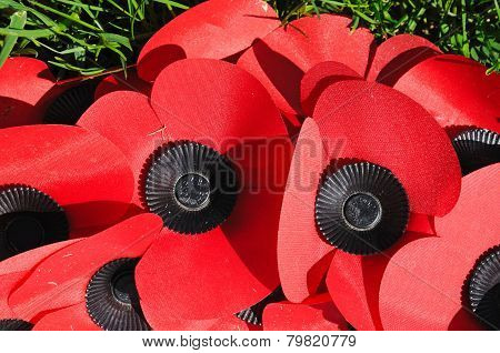 Remembrance poppies.