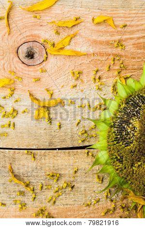 Background Flower Sunflower Seeds Wooden Countertop