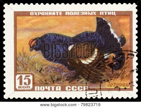 Vintage  Postage Stamp. Blackcock.