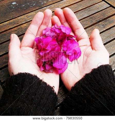 Winter Blossom In My Hands