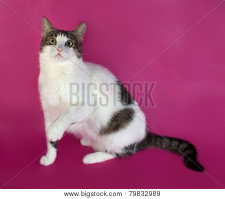 White With Spots Fat Cat Playing On Pink