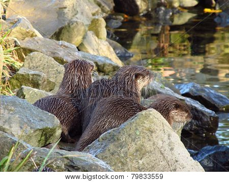 otters waiting for something
