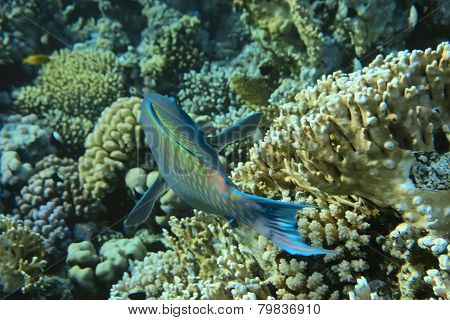 coral reef and fish