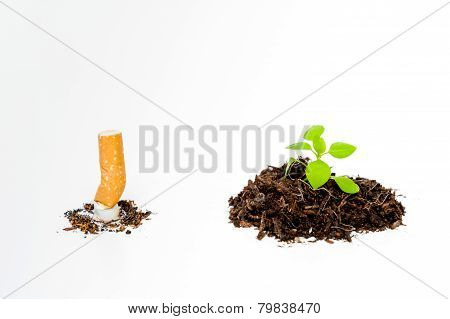 Extinguished Cigarette And Green Newborn Plant Isolated
