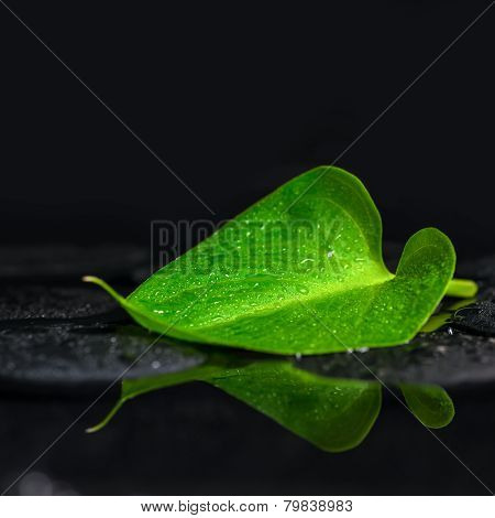 Beautiful Spa Background Of Green Leaf Calla Lily On Zen Basalt Stones With Drops In Reflection Wate