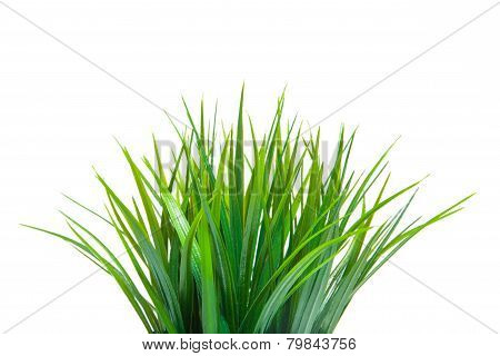 The green grass.