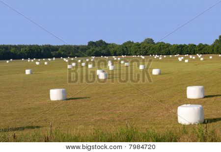 A New Kind Of Hayfield