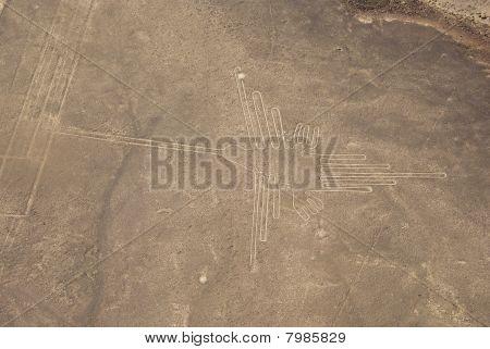 Hummingbird, Nazca