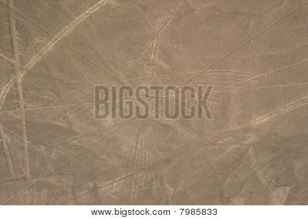 Condor, Nazca