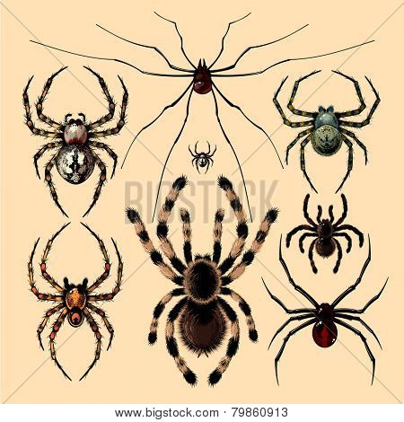 Realistic images of spiders