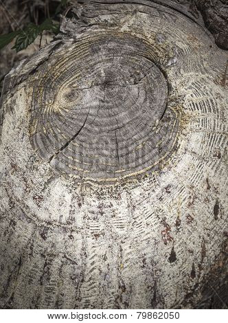 tree trunk with circular shapes