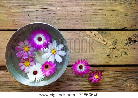 Silver Bowl With Cosmea Blossoms And Copy Space