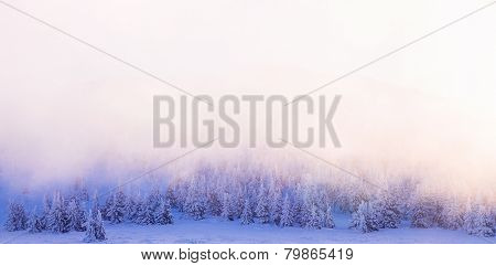 Beautiful winter forest border, sun light over trees background, fog over firs covered with snow, wintertime greeting card with copy space, beauty of mountainous nature