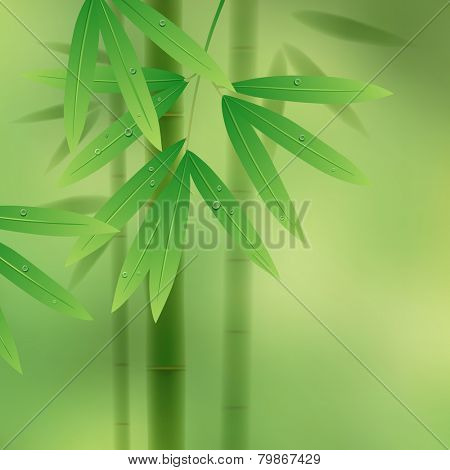 Green background with bamboo stems and leaves