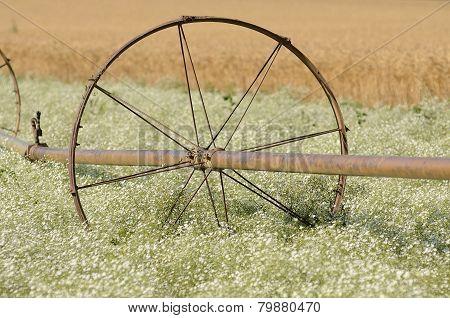 Clover Irrigation
