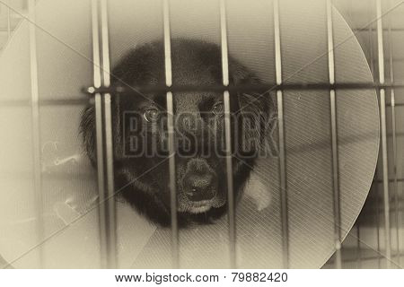 Sad Dog in Cage with Cone on Head
