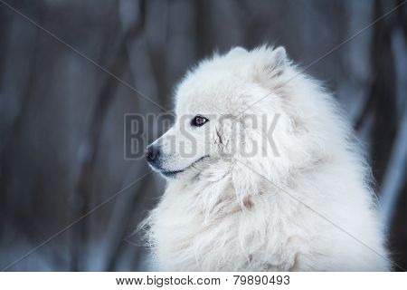 White Dog Sitting And Looking Aside