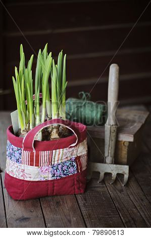 narcissus bulbs in handmade patchwork bag with garden tool and twig