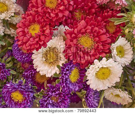 aster flowers bouquet closeup