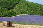 image of beehive  - Provence South France - JPG