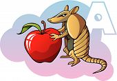 stock photo of armadillo  - Series of Children alphabet - JPG
