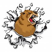 picture of grizzly bear  - A Bear bursting through Wall Mascot Sports - JPG