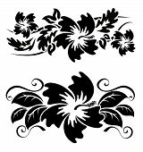 image of hibiscus  - Various hibiscus hawaiian tropical flowers black and white - JPG