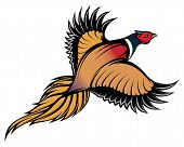 stock photo of pheasant  - vector illustration of a stylish multi - JPG