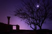 stock photo of blue moon  - Lonely tree under blue night sky with moon and stars - JPG