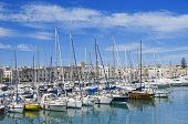 Yachts moored in Trani touristic port. Apulia. poster