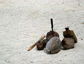 picture of french polynesia  - Four freshly fallen coconuts from a palm tree ready to be shucked on a deserted beach in Mo - JPG