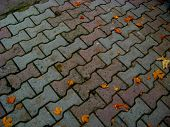 foto of paved road  - paving slabs on a dirt road in autumn with yellow leaves - JPG