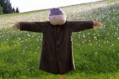 foto of scarecrow  - Homemade scarecrow stands against a background of green Meadow - JPG