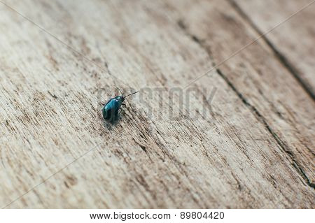 beetle and wood rustic background