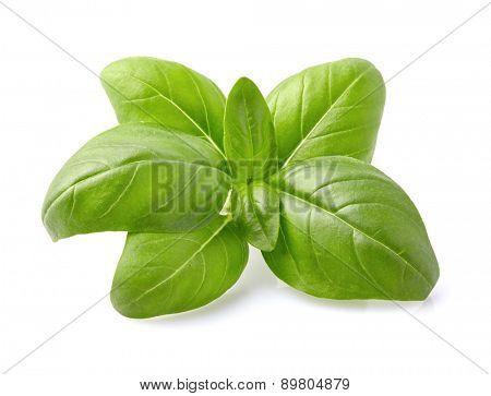 Basil spices