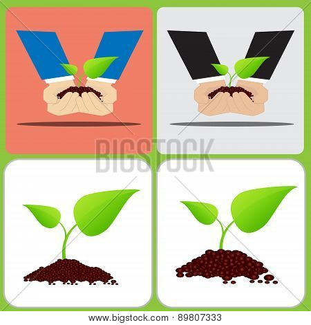 Two hand are planting Two leaf plant on soil