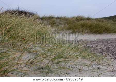 Dune-grass On The Beach, Northsea