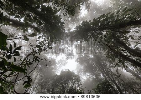 Misty tropical forest in early morning, perspective view from below