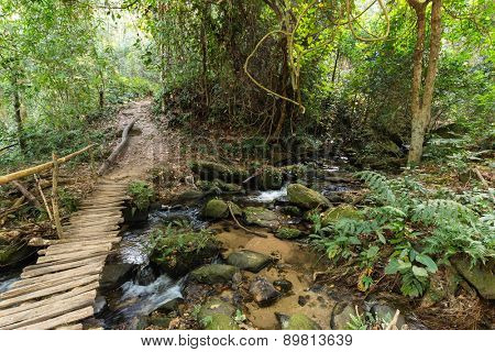 Wooden bridge in jungle over a small river, Doi Inthanon national park, Thailand