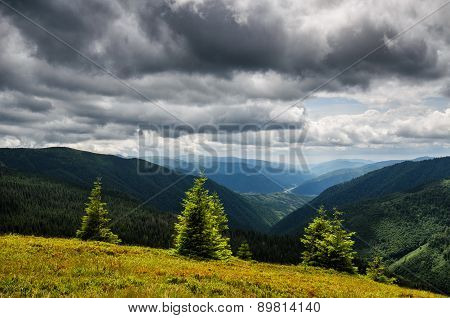Emerald Mountain Pine Trees